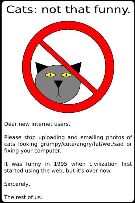cats, internet